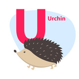 Zoo ABC Letter with Cute Urchin Cartoon Vector