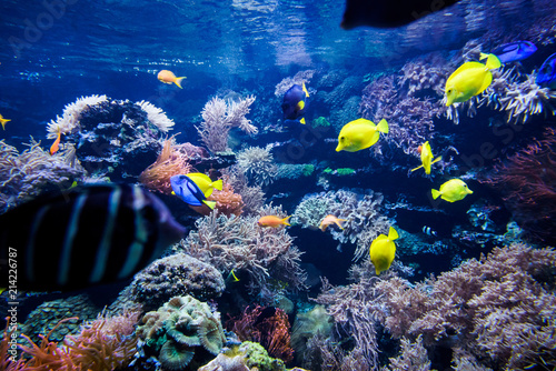 Kolorowa rafa koralowa z ryba i kamieniem