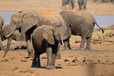 African elephants (Loxodonta africana) at a waterhole, Kruger National Park, South Africa.