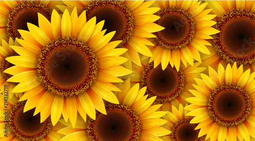 Fototapeta Sunflowers background, summer flowers vector illustration.