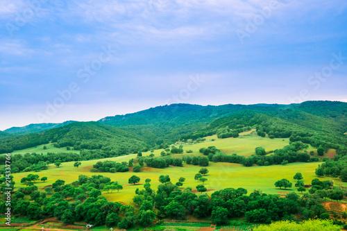 Foto Spatwand Blauwe hemel Summer prairie