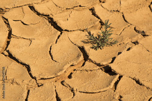 Foto Murales Small plant in the middle of the desert dry soil. A symbol of perceivance