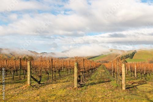 Foto Spatwand Wijngaard autumn vineyards landscape in Marlborough region, New Zealand