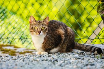 cat enjoying himself outdoor