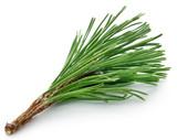 Pine leaves - 214448355