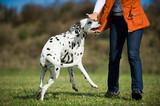 Frau wehrt Hund ab