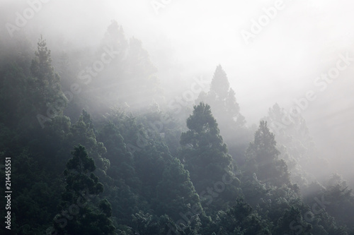 Early morning light rays shine through fog illuminating treetops - 214455551