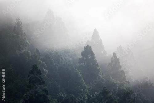 Early morning light rays shine through fog illuminating treetops - 214455551