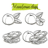 Hand drawn sketch style Mandarin set. Single, group fruits, mandarin chips, slices. Organic food, vector doodle illustrations collection isolated on white background.