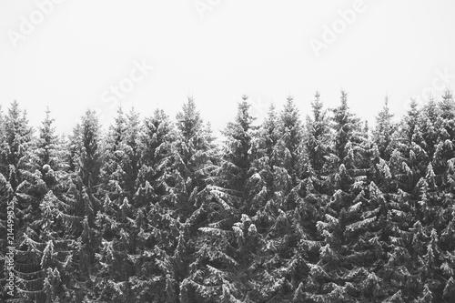 Schneebedeckte Nadelbäume  - 214499525