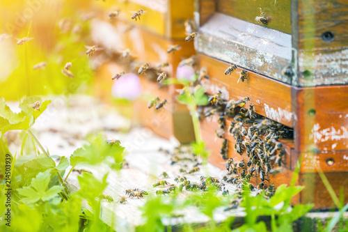 In de dag Bee Bienenhaus im Blumenfeld
