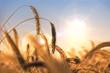 Leinwanddruck Bild - Getreide & Trockenheit