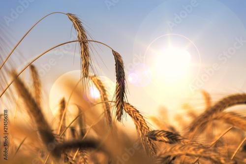 Leinwanddruck Bild Getreide & Trockenheit