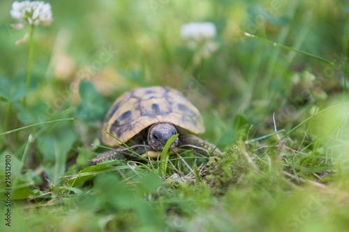 Foto Spatwand Schildpad Schidgröte