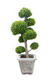Bonsai that is separated from the background