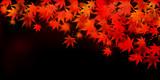 紅葉 葉 秋 背景