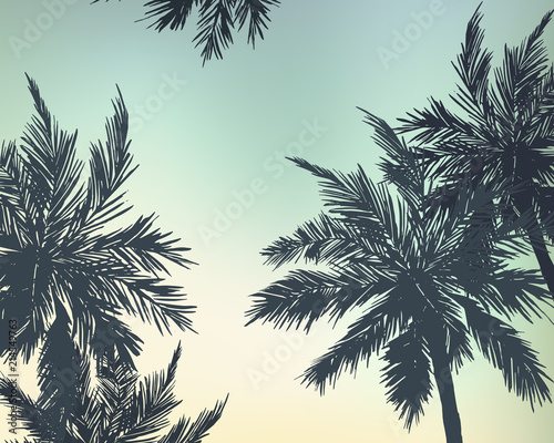 Palm trees summer background. Vector illustration - 214549763