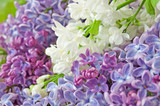 lilac flowers bunch - 214564142