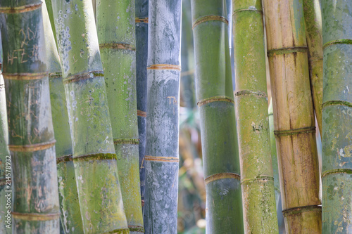 Canvas Bamboe Bamboo Mauritius