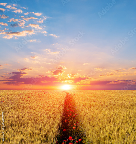 Foto Spatwand Klaprozen beautiful sunset scene, red poppy field on a sunset background
