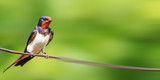 bird sits on a panoramic wire - 214611791