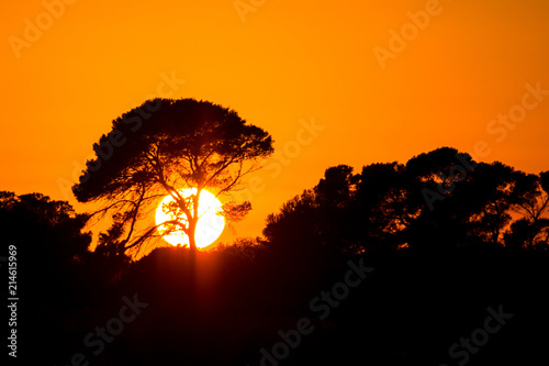 Canvas Baobab Big African tree silhouette