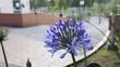 canvas print picture - Flor