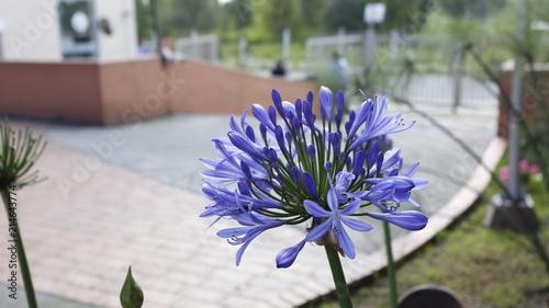 canvas print picture Flor