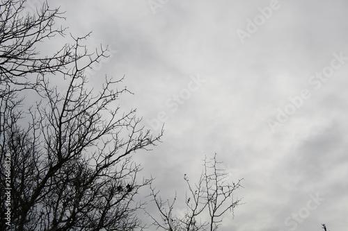 Árbol en invierno - 214688328