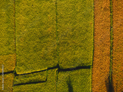 Canvas Rijstvelden Aerial view of rice fields of Bali, Indonesia. Top view
