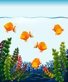 Close up goldfish in tank