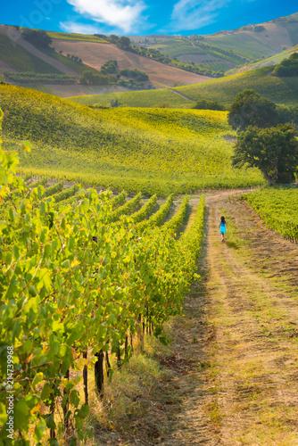 Foto Spatwand Wijngaard Beautiful vineyard on hills