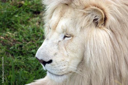 Foto Spatwand Lion SONY DSC