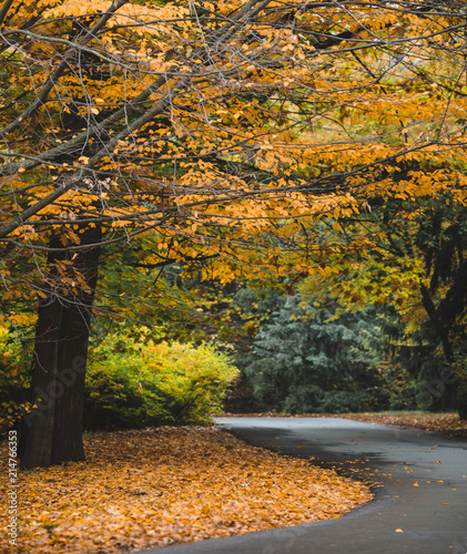 Autumn landscape of yellow leaves park and road