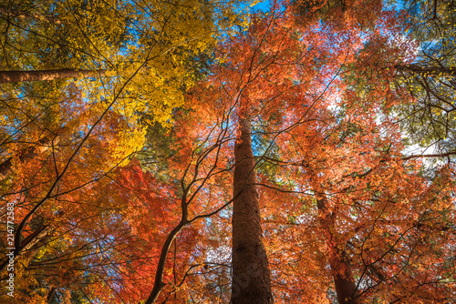 Fotobehang Herfst multi color trees in the autumn forest