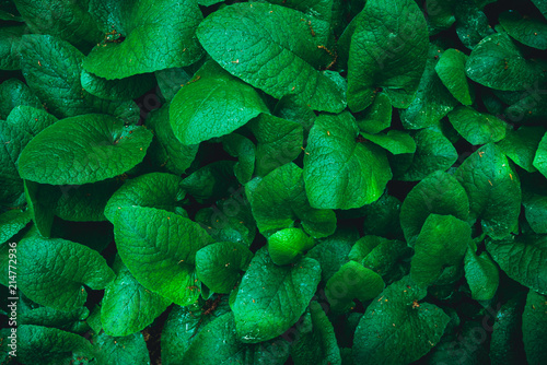 leaves background texture. green leaf