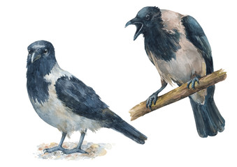 Set of crows with different emotions. Angry, crying bird and calm, quiet birds. Watercolor hand drawn illustrations isolated on white background.