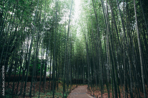Canvas Bamboe Bamboo forest walkway with film vintage style