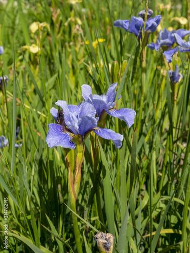 Aluminium Iris OLYMPUS DIGITAL CAMERA