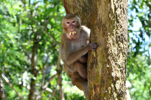 In de dag Aap Mother, who eat banana hugging baby monkey Sitting on tree.