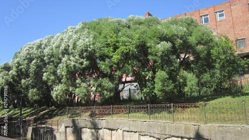Foto Spatwand Olijf райский сад в мотовилихе