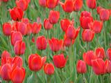 flower -13 - 214791774