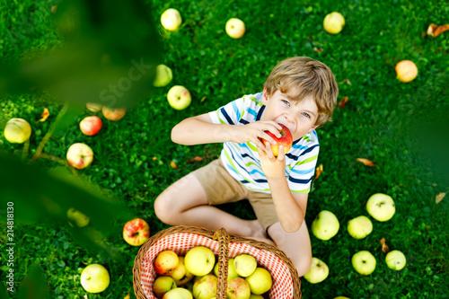 Leinwandbild Motiv Little kid boy picking red apples on farm autumn