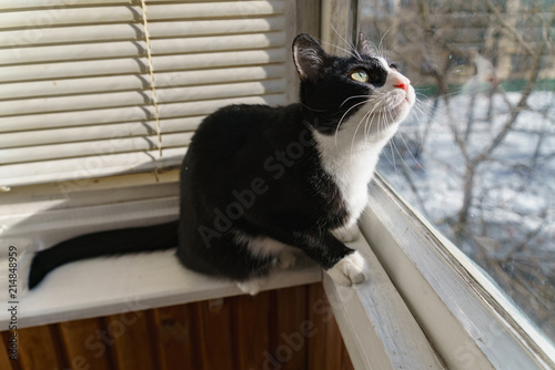 Foto Spatwand Kat funny cat