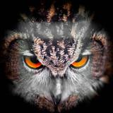 Eagle Owl Staring - portrait - 214853166