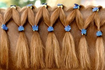 horse mane with a hairdo