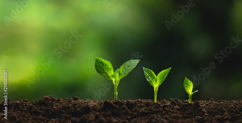 Foto Murales Plant a tree Natural tree Green backgroun seedlings in nature