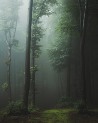 Fairy tale trail in foggy forest. Fantasy spooky landscape in woodland