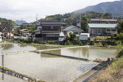Canvas Rijstvelden Japanese country house in front of rice fields