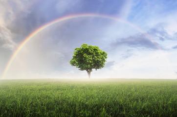Rainbow with meadow. © nirutft